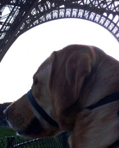 Max enjoying the Eiffel Tower.