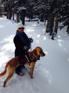 Max helping me snowshoe!  This is one of the ways he helped return me to a fuller life, even if people don't leash their dogs.