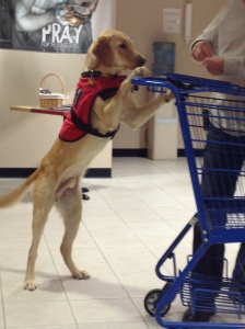 Max learning to push a grocery cart.